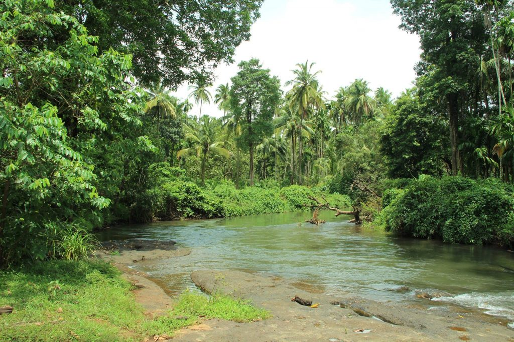 With the pledge for greener arbitrations in mind: river bank near Usgalimal village, South Goa, India